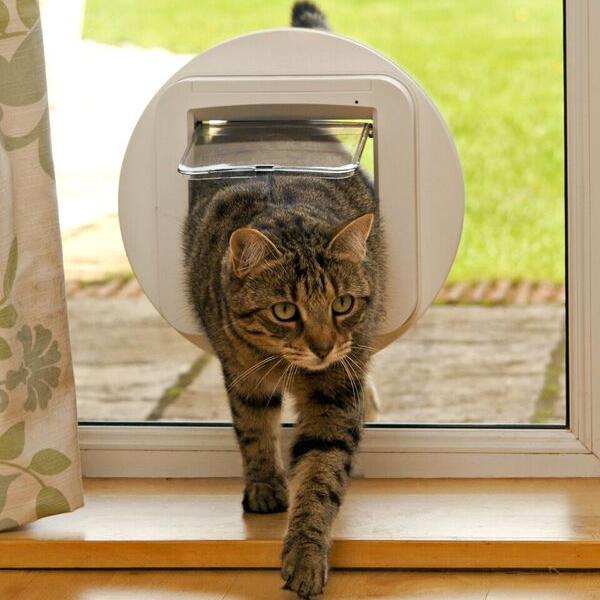 cat-door